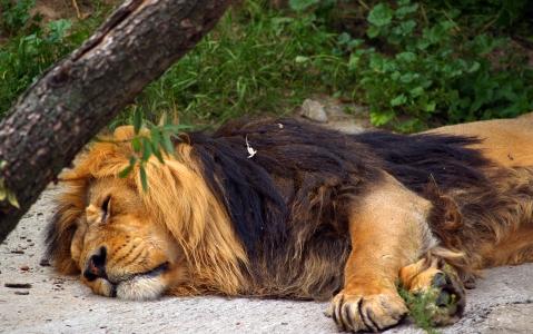 activity Zoo de Moscou