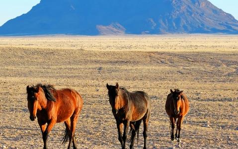 activity Balade à cheval dans le désert du Namib