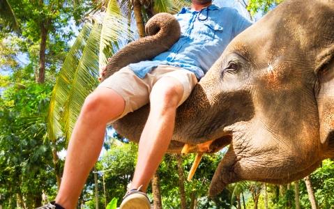 activity Balade à dos d'éléphants