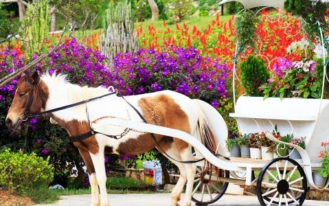 activity Balade en charrette à cheval