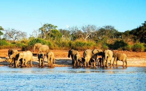 activity Croisière sur la rivière Chobe