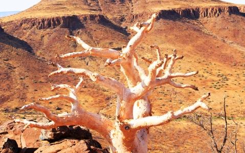 activity La Forêt pétrifiée du Damaraland