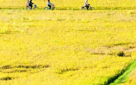 activity  Le verger Vam Xang à vélo
