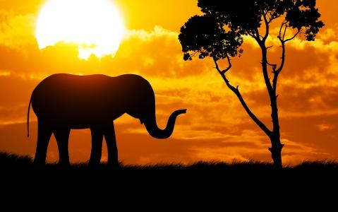 activity L'expérience du safari de nuit à Etosha