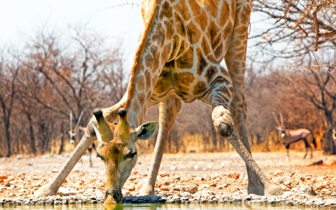 activity Safaris à Ongava Private Game Reserve