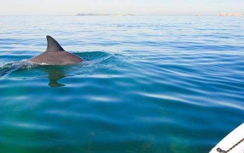 activity Sortie kayak avec les dauphins