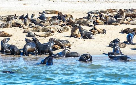 activity Une croisière à Pelican Point