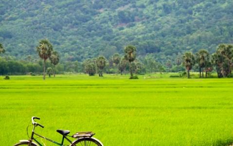 activity  Vélo au cœur de la baie d'Halong terrestre