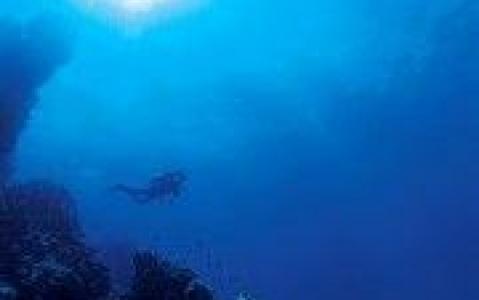 activity Plongée avec les raies mantas ou les requins baleines
