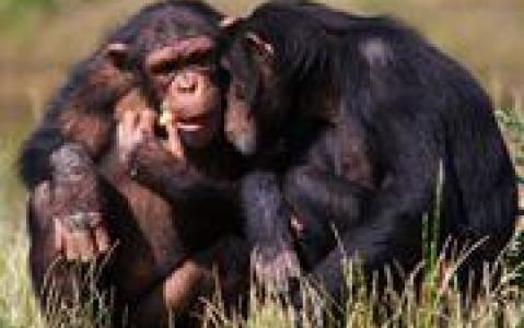 activity Visite de Chimpanzee Eden-Institut Jane Goodall à Nelspruit