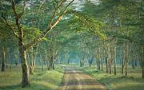 activity Arabuko Sokoke Forest Reserve