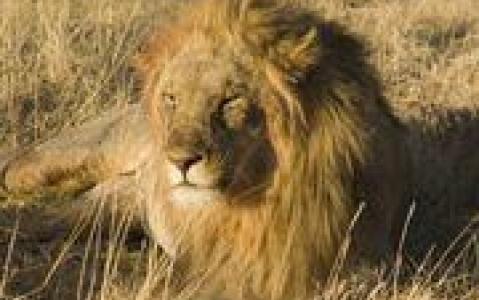 activity Les activités safari proposées par les lodges (Okavango et Chobe)