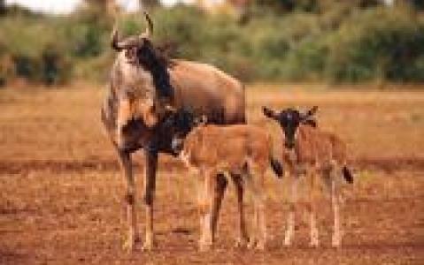 activity Petits treks à la découverte de la nature à Ol Pejeta Conservancy
