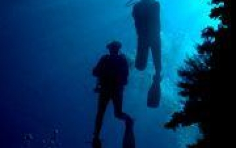 activity Plongée sous-marine et snorkeling au Kenya