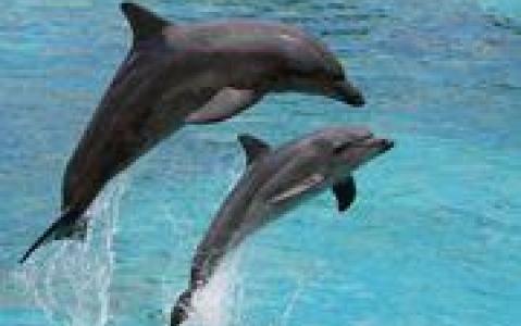 activity Une croisière avec les dauphins et l'excursion à Sandwich Harbour en 4x4
