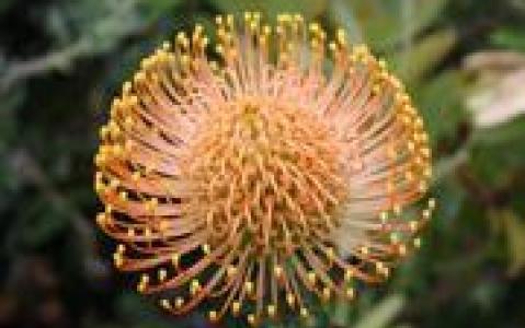activity Découverte des Jardins botaniques de Kirstenbosch