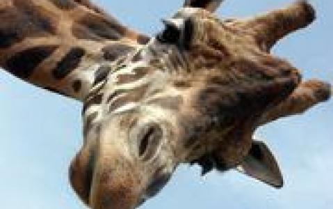 activity Langata Giraffe Center