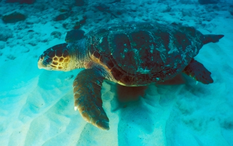 activity Observation des tortues