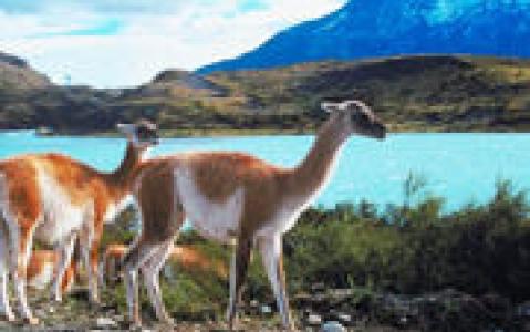 activity Excursion aux glaciers Balmaceda et Serrano