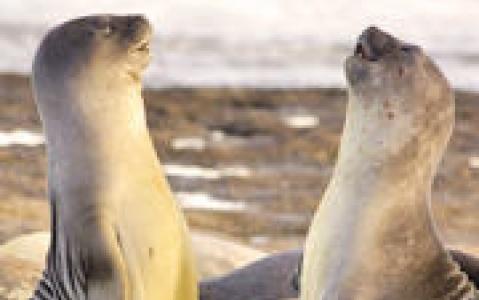 activity Plongée avec les lions de mer