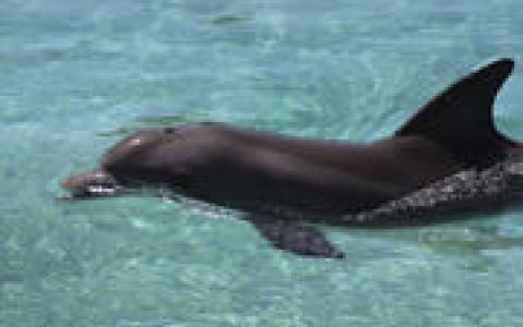 activity Nagez avec les dauphins ! (Adelaïde)