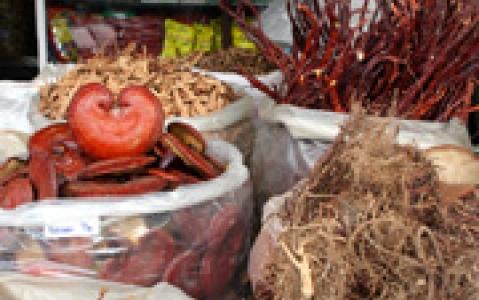 activity Recherche de plantes médicinales à Yen Bai