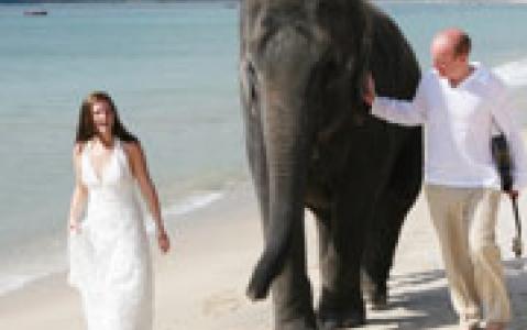 activity Rencontre avec des éléphants