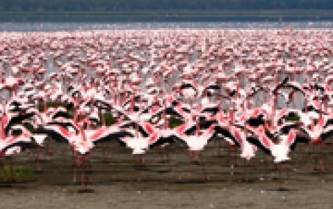 activity Croisière sur l'estuaire de Santa Lucia