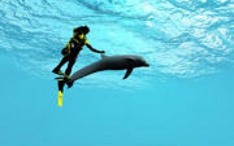 activity Nager avec les dauphins à Paradise Island !