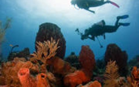 activity Fonds marins de Stuart Cove's