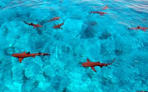 activity A la rencontre des requins !