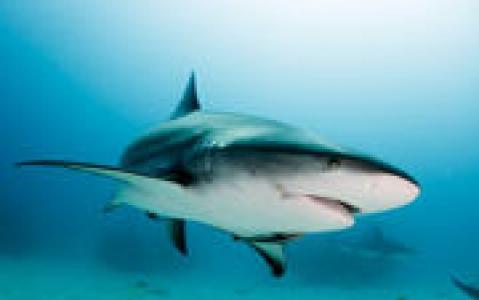 activity Le Shark labo