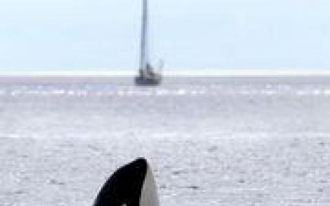activity Croisière d'observation des orques