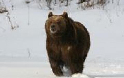 activity Croisière d'observation des ours
