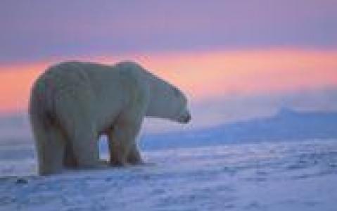 activity Découverte de la faune en Arctique