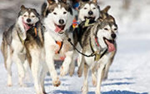 activity Balade traîneau à chiens (2 heures)
