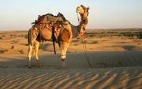 activity Balade à dos de chameau