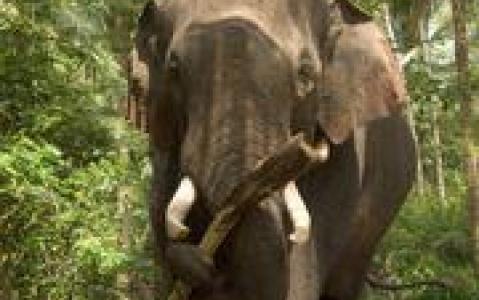 activity Découverte du Parc National d'Erakivulam en Jeep