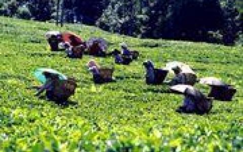 activity Déjeuner dans une plantation d'épices à Kalaketty Estate