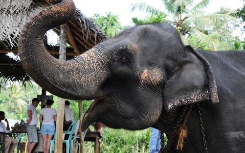 activity Balade à dos d'éléphant