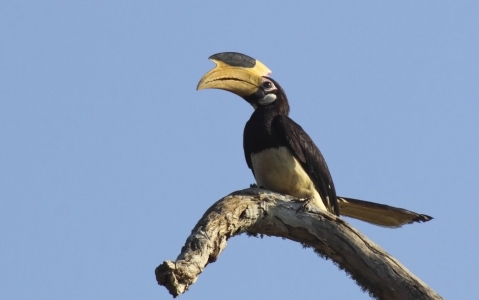 activity Visite de la réserve de Yala en 4 x 4