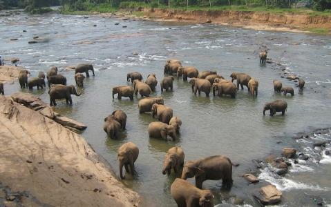 activity Visite de l'orphelinat des éléphants