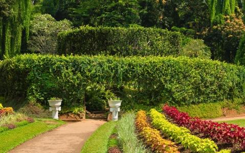 activity Visite du jardin botanique
