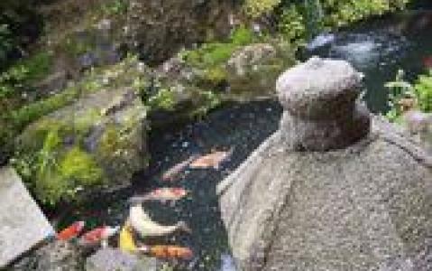 activity Visite guidée des villes de Takamatsu, Itano, Iya, Kotohira et Matsuyama.