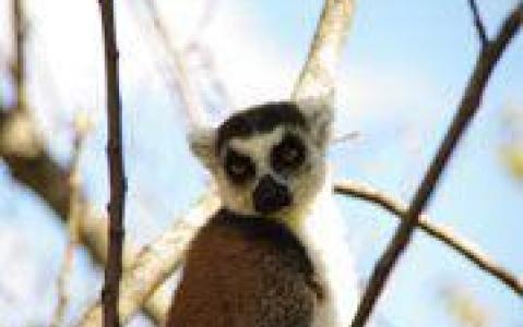 activity Visite de Lémuria Land