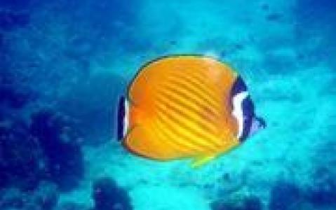 activity Exploration des fonds marins en plongée