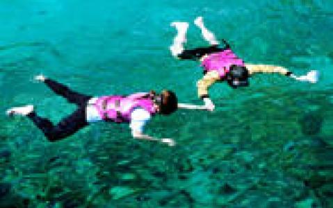 activity Snorkeling au milieu des poissons multicolores