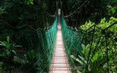 activity Pont suspendu de Taman Negara