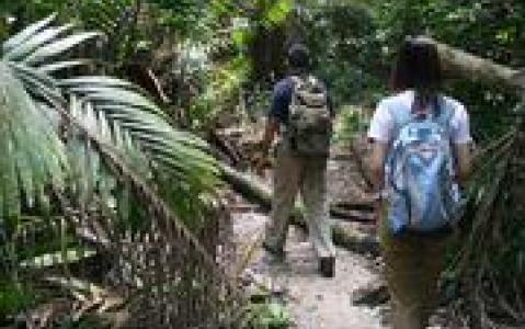 activity A la découverte de la rafflésie dans le parc de Gunung gading