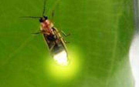 activity Croisière d'observation des lucioles à Kuala Selangor